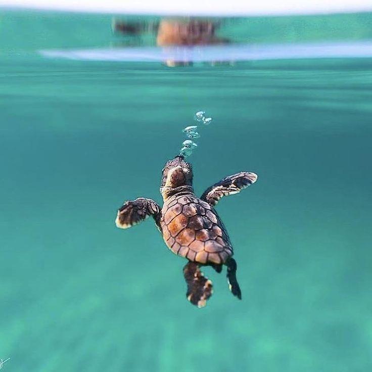 Brandneue Meeresschildkröte schwimmt Ben Hicks … . . . #Fotografie #wild #w