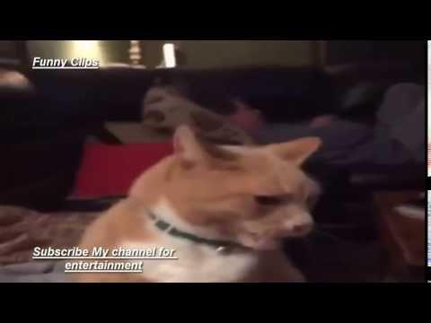 Funny Clip Cats Gets Brain Fareez 2016