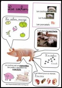 Cochon                                                                                                                                                                                 Plus