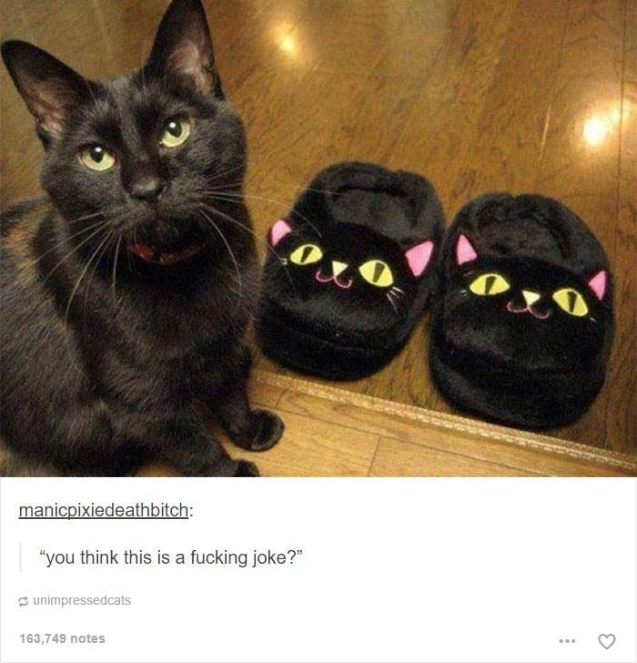 18 Hilarious Tumblr Posts About Cats – Pleated-Jeans.com