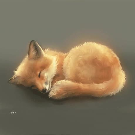 Just relax yourself by looking at this cute fox