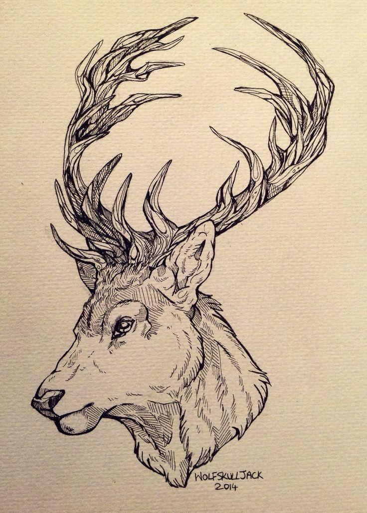 wolfskulljack: A tattoo design for a client. Deer are one of my favourite animals