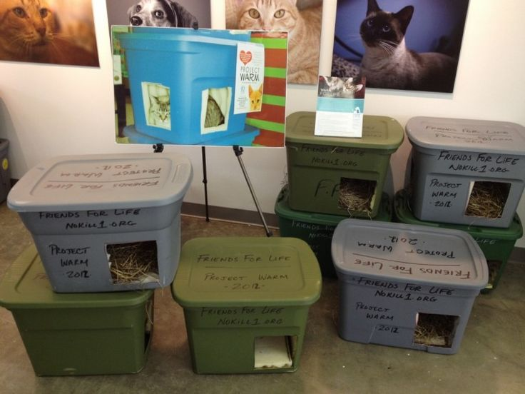 Friends For Life initiative gives feral cats shelter for winter