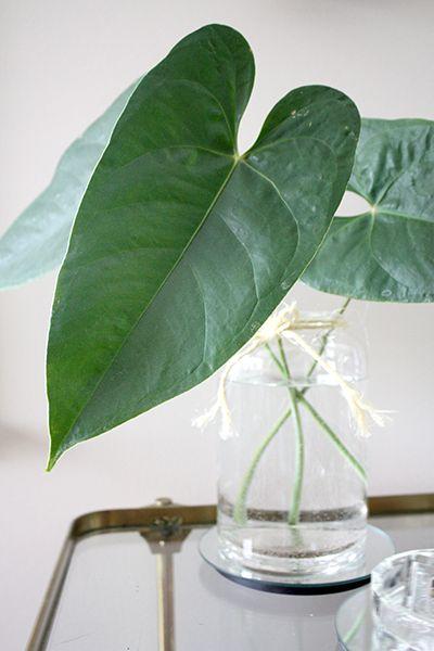 22 best leaves in vases images on Pinterest  Flower