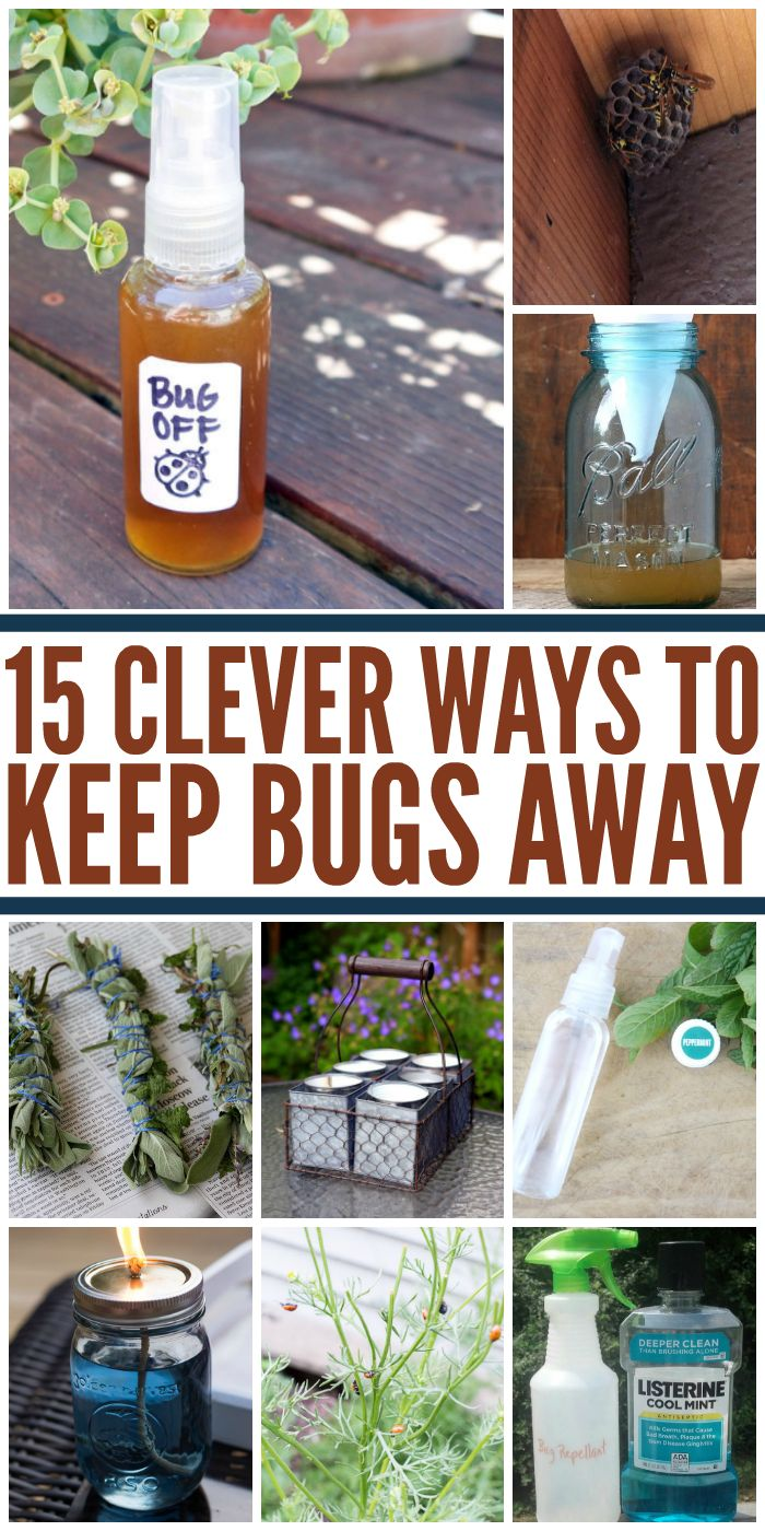 I hate bugs so I'll be sure to try these tricks to keep them as far away as possible this summer. - One Crazy House