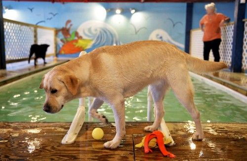 Exercise, portion control will keep pets fit and furry #pets #health