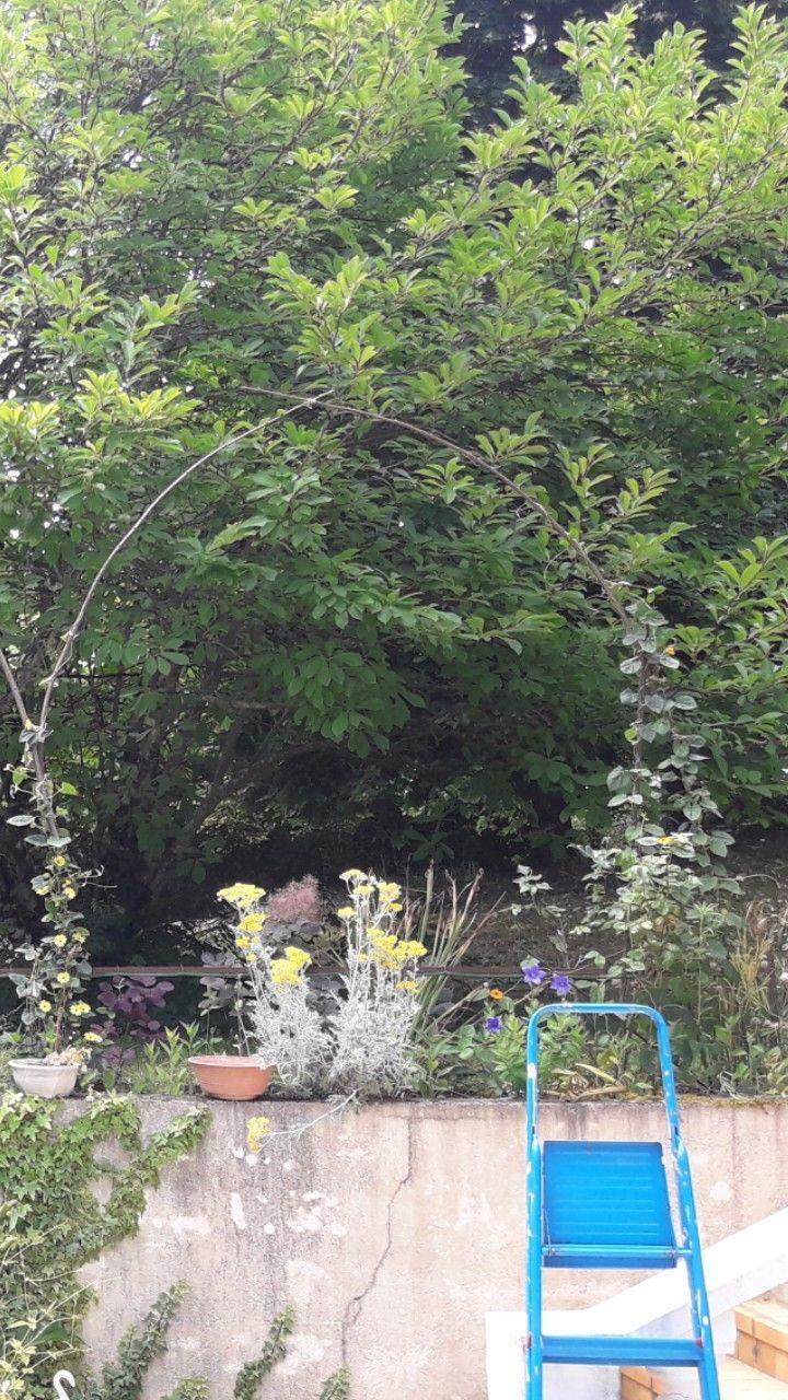 25 best fleur grimpante ideas on pinterest plante grimpante plantation rosier and jardin anglais. Black Bedroom Furniture Sets. Home Design Ideas