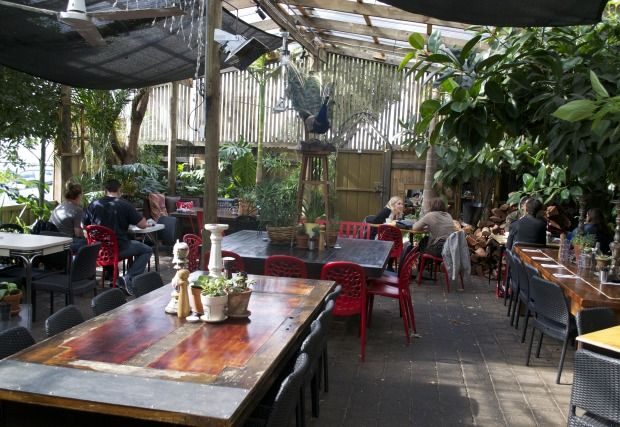 Cafe Go Geelong Courtyard peacock feathers