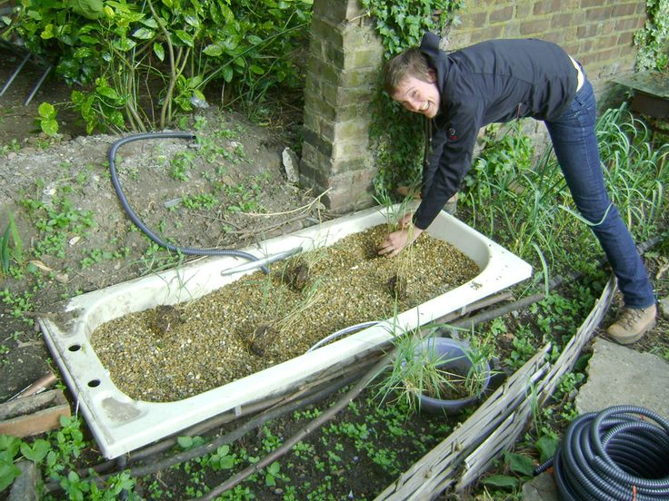 Bathtub reed bed for grey water treatment, cool stuff!