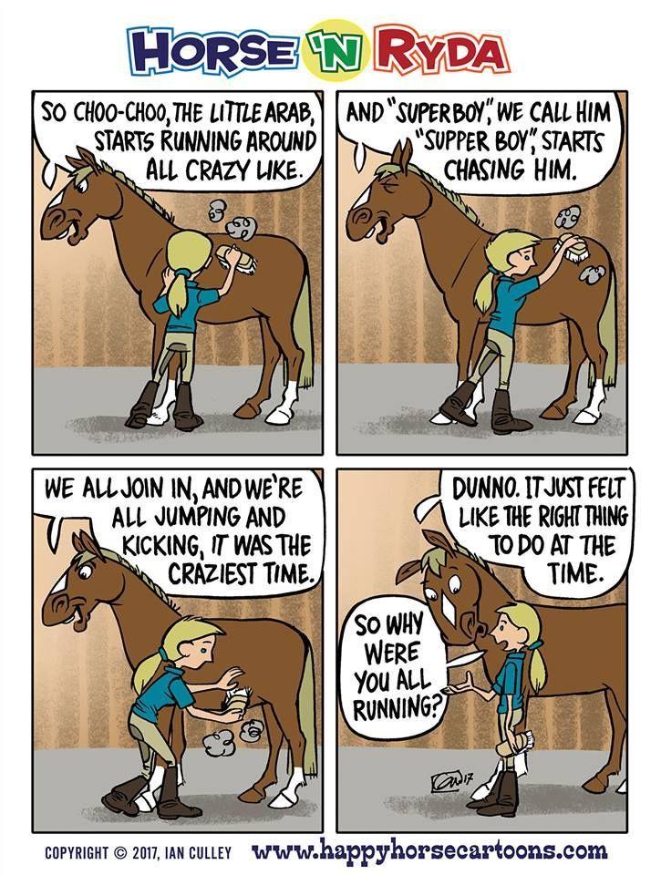 Credit Horse N Ryda Funny Horse Memes Funny Horses Horse Jokes