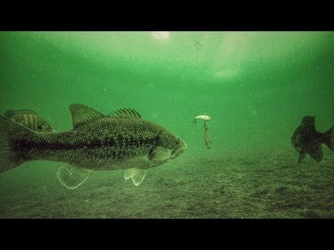 Fishing UK - BEST Lures to Catch Bass in the Winter - Bass Fishing Tips