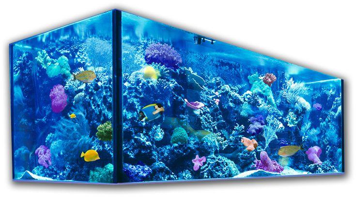 AquaCoral: эксклюзивные морские аквариумы LuxuryOcean™ : элитный, дизайнерский аквариум в Москве