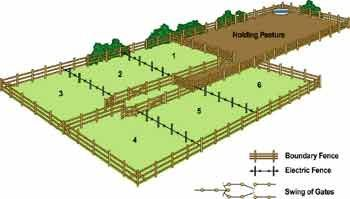 Rotational grazing is another way to help let the grass recover. By moving the cattle from pasture to pasture over a certain period of time will help the grass grow. It can be time consuming and labor intensive but in the end it will mostly pay for itself.