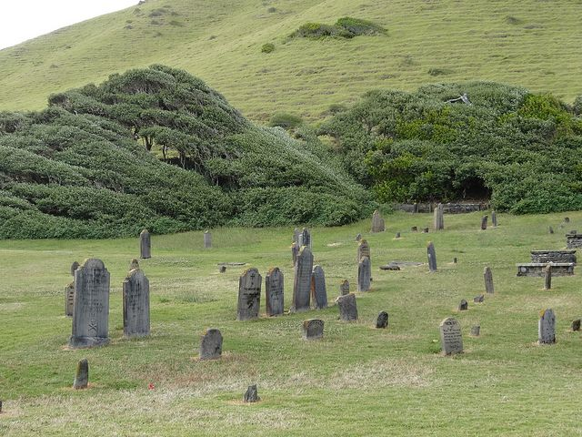 Windswept trees at Norfolk Island cemetery.