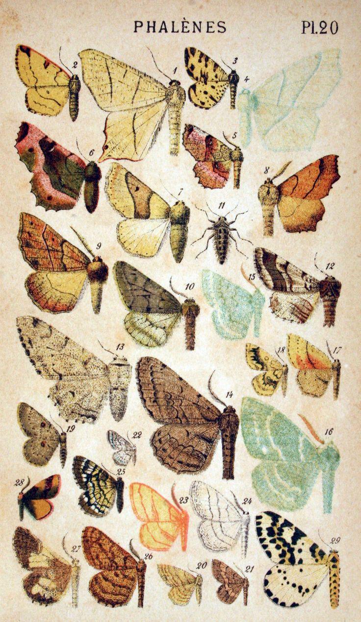 Vintage butterfly illustration; http://vintageprintable.com/wordpress/