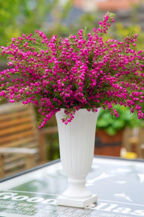 Boronia Boronia In 2020 Pretty Flowers Beautiful Flower Arrangements Beautiful Flowers