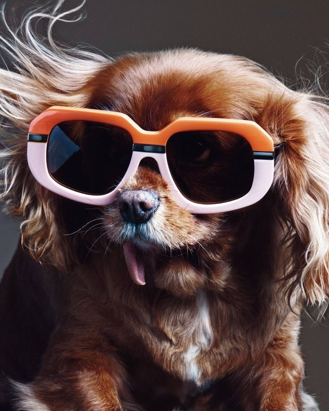 Toast the Sooo Cute Instagram Dog Star is the Unexpected and Fashionable New Face of Karen Walker Eyewear SS 2015 Campaign l #ToastMeetsKaren