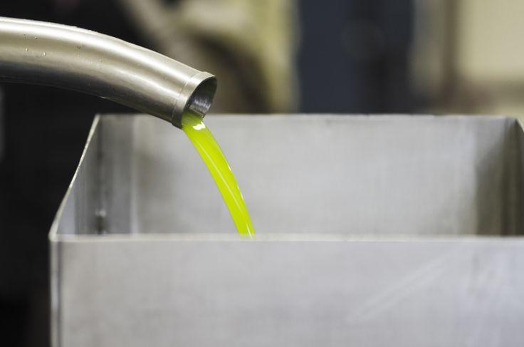 The liquid gold #Laudemio #EVOO #olive #oliveoil #Tuscany #green