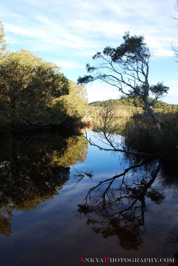 Reflections @ the Tea Tree Lake, Suffolk Park, East Coast Australia http://ankya-klay.artistwebsites.com/featured/tea-tree-lake-reflections-ankya-klay.html
