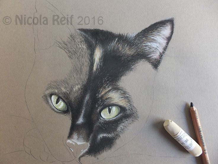 Private commission WIP. Pastel pencil on Pastel paper. Photo provided by client.