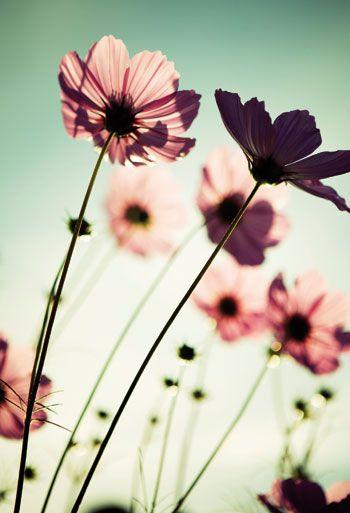 Fototryck Blommor i färg 220x150cm - Stoff & Stil