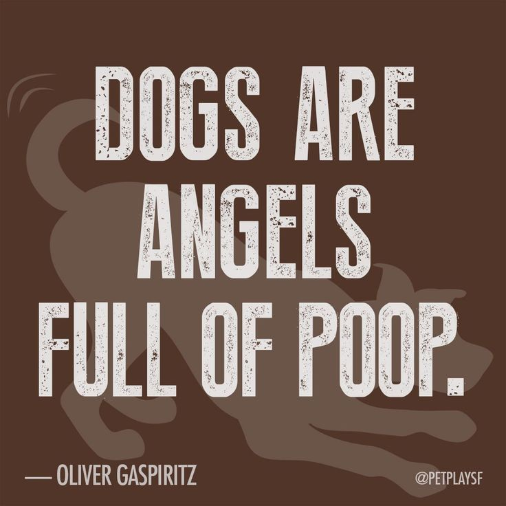 """""""Dogs are angels full of poop."""""""