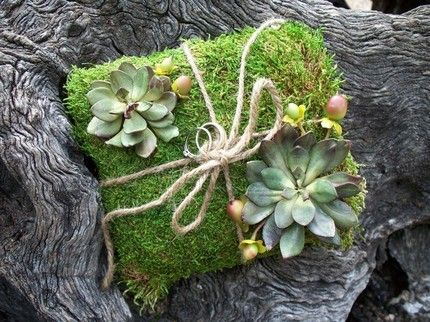 moss package