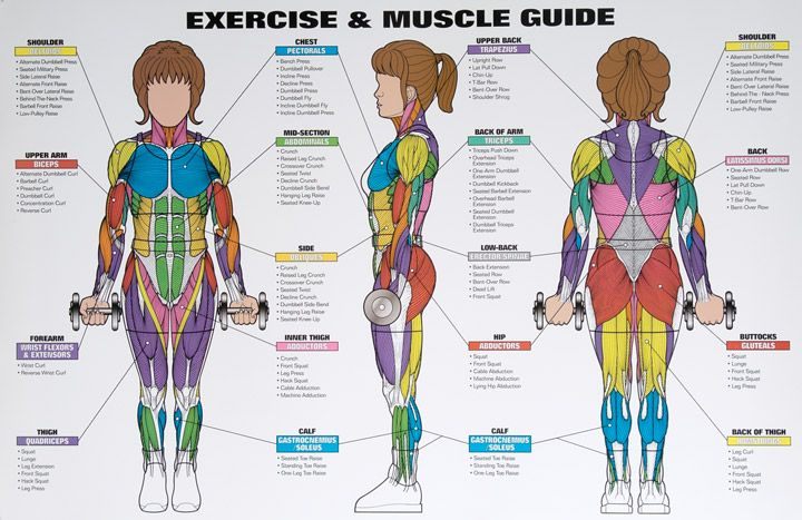 Best exercises targeting each muscle group groups