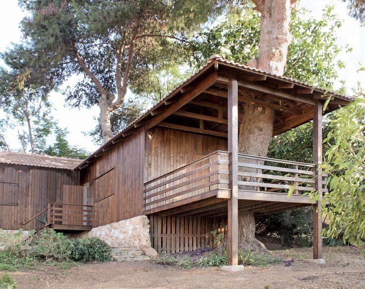 Projetado pelo escritório Golany Architects, esta casa em Israel foi feita ao redor de diversos pinheiros, em Jerusalém (foto: Yaron Golany)