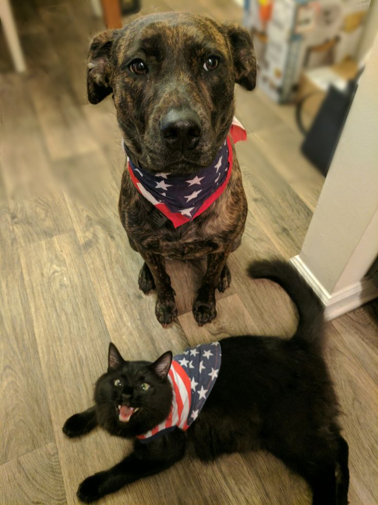 Maddie and Twix Celebrating Brexit 1776 http://ift.tt/2sJtynK