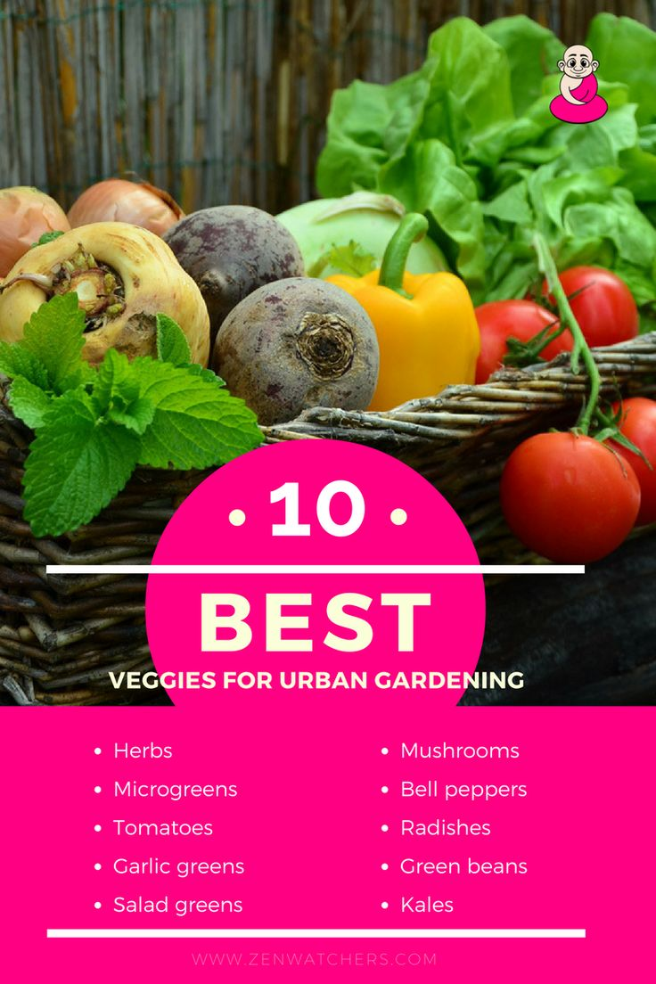 rooftop garden, urban farming, sustainable food, upcycling