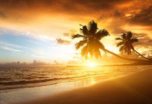 Cocotier – Côte – Coucher de soleil – Horizon – Mer – Nuageux – Plage