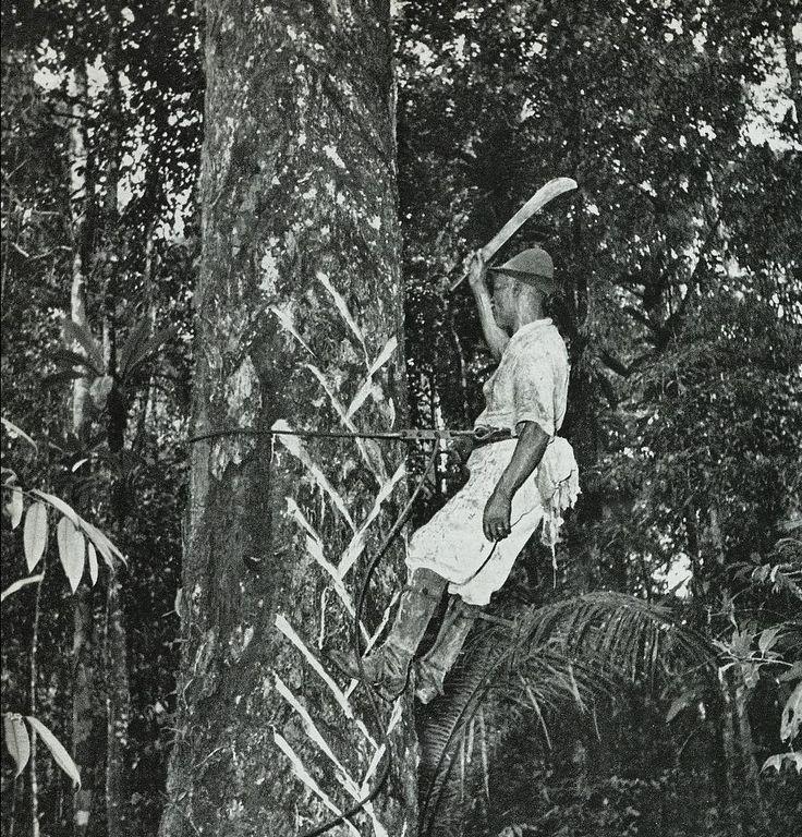 De creolen na afschaffing van de slavernij.  Man aan het werk in de balatawinning. klik voor meer info. Foto: Willem van de Poll, Suriname: een fotoreportage van land en volk. 's-Gravenhage : Van Hoeve, 1951.