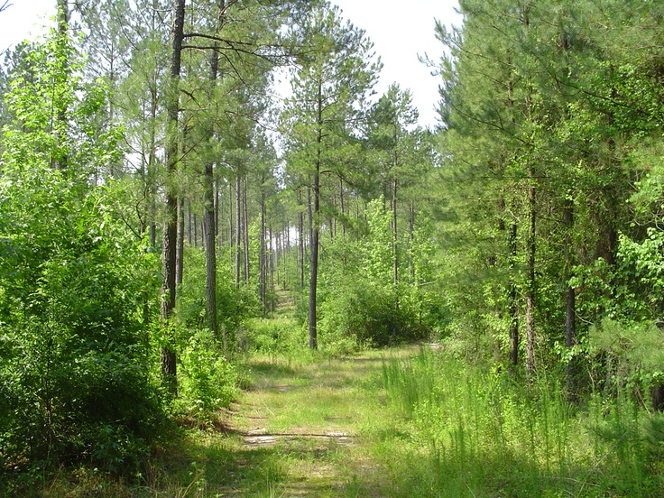 timberland sales llc