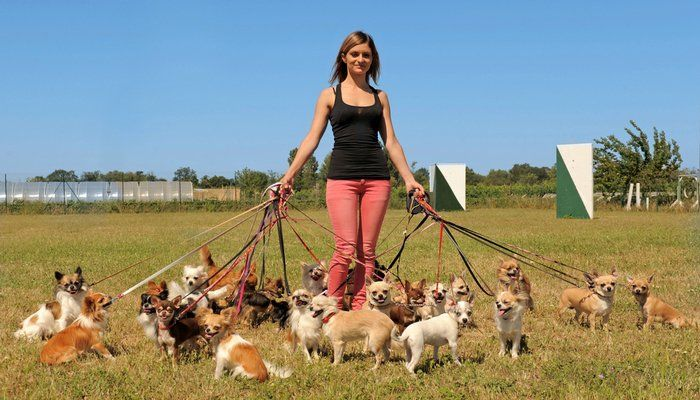 Ask a Dog Walker: Dog Walker Salary & Dog Walking Rates - Top Dog Tips