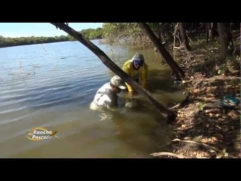 ▶ Peixe Pirarucu gigante, mais de 2 metros - YouTube instrucoes, 17:58 - soltou o peixe