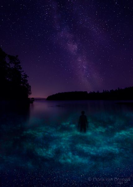 Bioluminescence in the water of the San Juan Islands (Puget Sound). I have experienced this; you do not forget it.