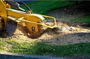 Finding Local Tree Root Grinder Services Milton