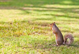 Best 25 squirrel repellant ideas on pinterest a - How to keep squirrels from digging in garden ...