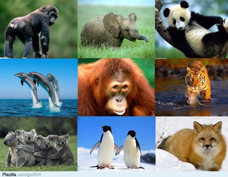 dieren - Google zoeken