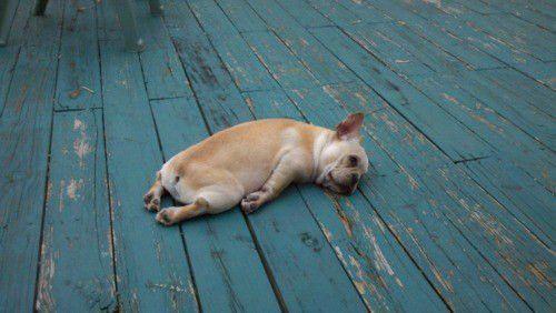 お散歩疲れ?それとも寝不足?理由は分からないけれど、なんだかすっごく疲れちゃった犬たちの画像を集めました!