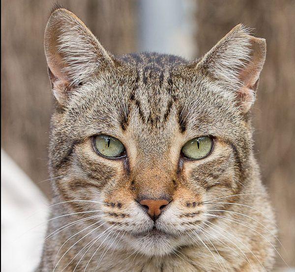 00572-01112015-trifolium gatos pep