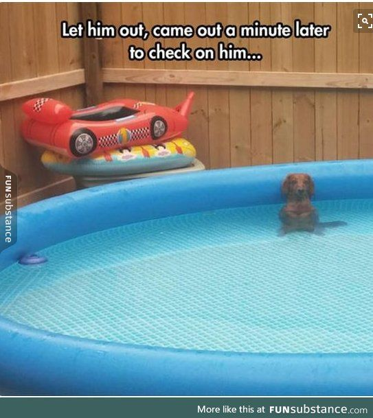 uhoh that's the peeing in the pool face