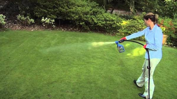 Keep Your Yard Looking Great With Bayer Advanced Lawn Care Products!