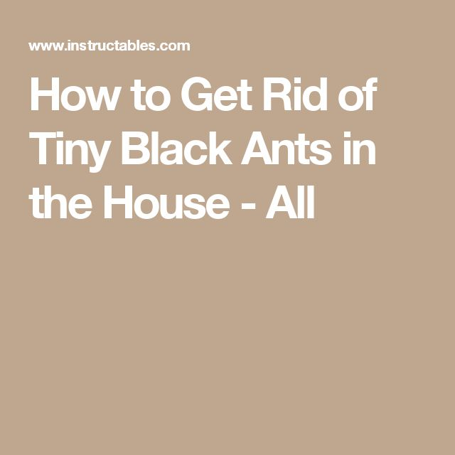 How to Get Rid of Tiny Black Ants in the House - All