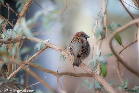 sparrow Photo by kevin fairbridge -- National Geographic Your Shot