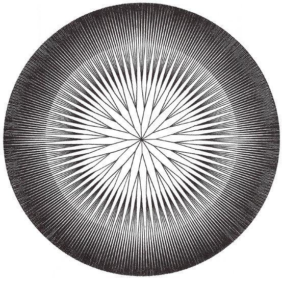 figure 7: 'Kolomyjec's Moire'.