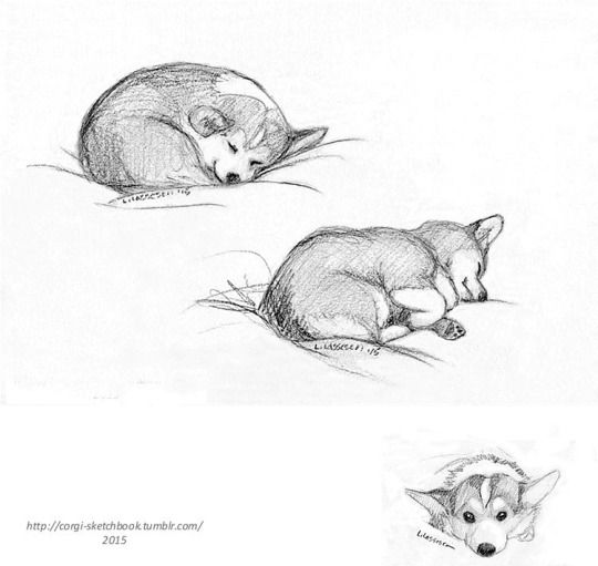 how to draw a corgi face