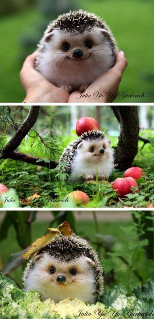 Adorable smiling hedgehog!