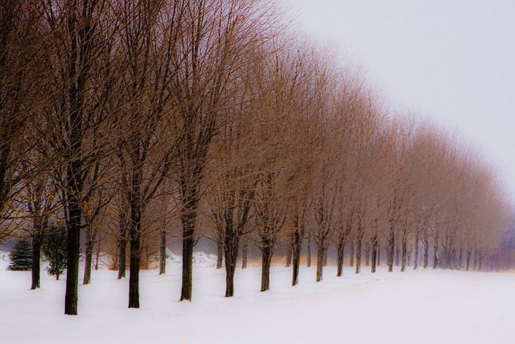 brown trees in snow
